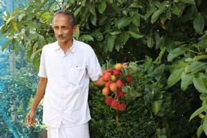 പഴവര്ഗ്ഗ കൃഷി: കുരുവിള ജോസഫിനെ മാതൃകയാക്കാം