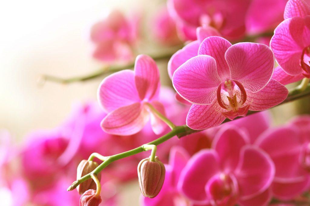 orchid fest