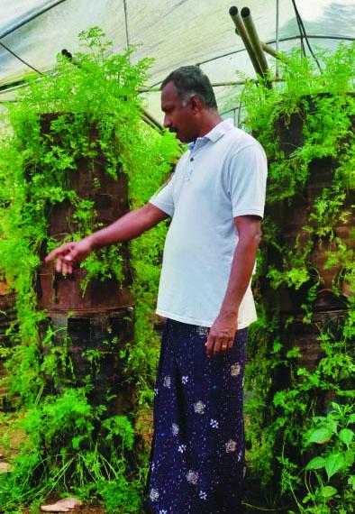 കാരറ്റ് കൃഷി : നൂറുമേനി വിളവുമായി കവളക്കാട്ട് റോയിയുടെ ടാര്വീപ്പയിലുള്ള നൂതന കൃഷിരീതികള്